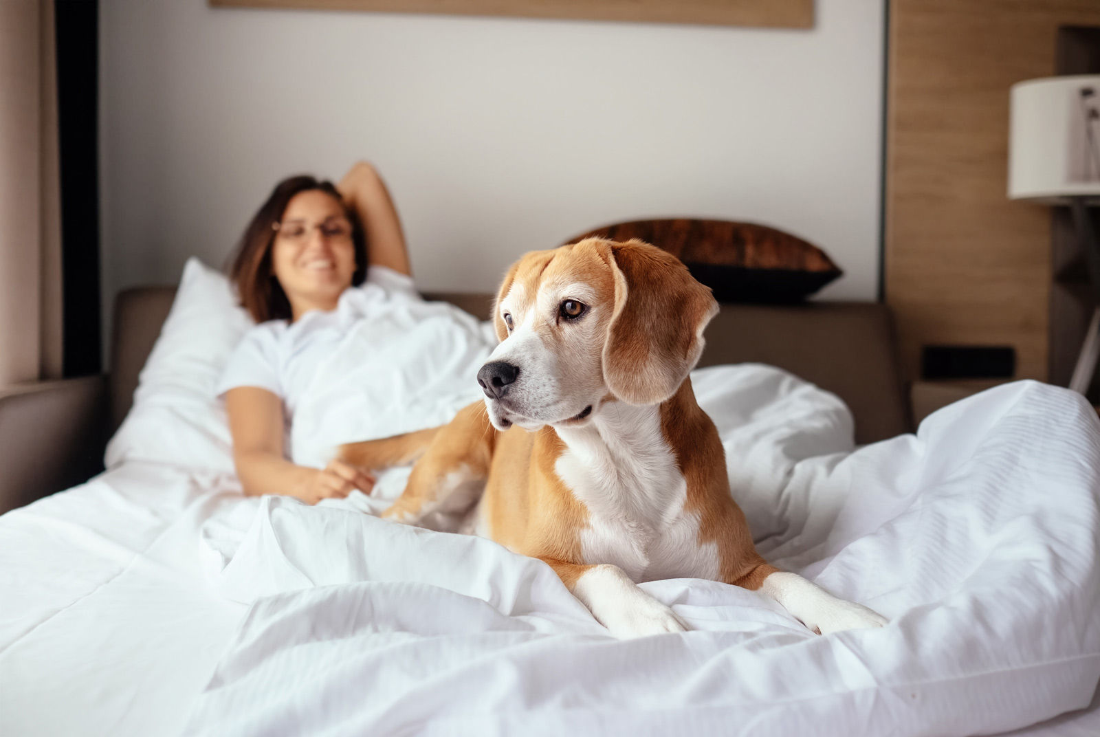Ensure that Fido is safe and comfortable when staying at pet-friendly hotels in Medicine Hat.